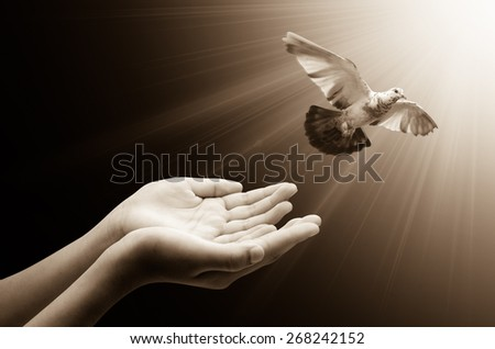 Hand releasing a bird into the air , concept for freedom, peace and spirituality - stock photo