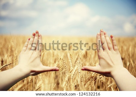 Hand's frame over the wheat field - stock photo