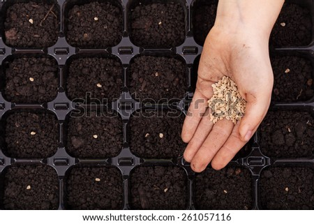 Hand spreading seeds into germination tray - spring sowing, closeup - stock photo