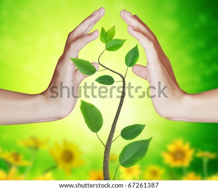 hand to protect the trees - stock photo