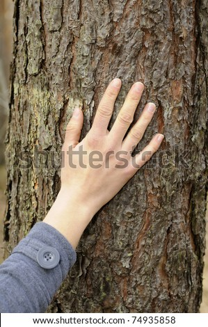 hand touches a tree - stock photo