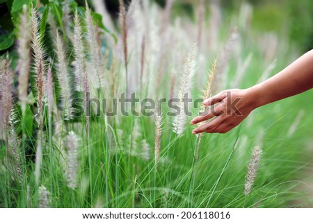Hand touching a reed grass beautiful scene  - stock photo