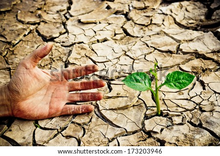 hand trying to reach a tree growing on cracked earth / tree growing on cracked earth / growing tree / save the world / environmental problems / cut tree - stock photo
