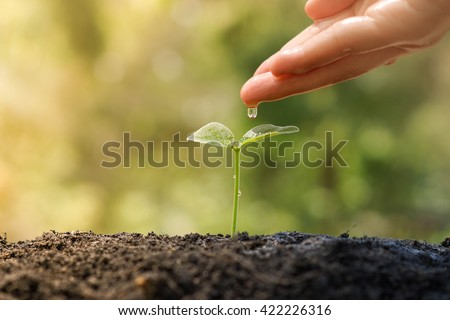 Hand watering a tree growing on fertile soil with green and yellow bokeh background / nurturing baby plant / protect nature - stock photo