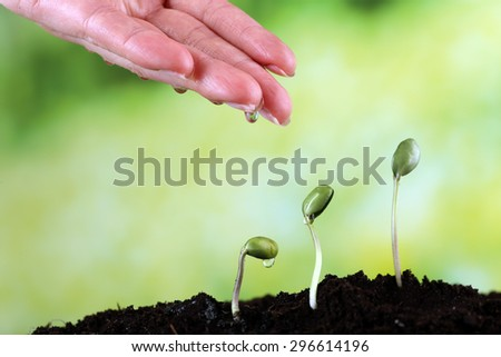 Hand watering green bean seedlings in soil on bright background - stock photo