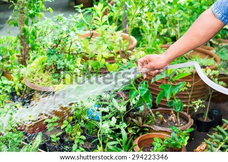 hand watering the plants with a garden  - stock photo