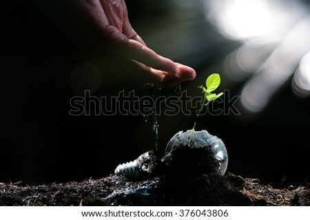Hand watering to small plant in the morning - stock photo
