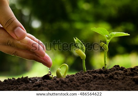 Hand watering to young plant with seedling and plant growing concept