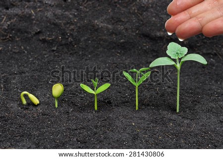 hand watering young plants growing in germination sequence - stock photo