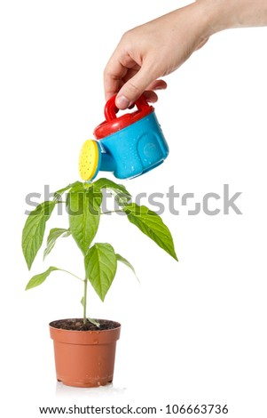 hand with a color watering can,  pouring water on  plant