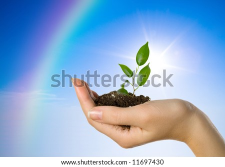Hand with a plant on a background of the blue sky and a rainbow - stock photo