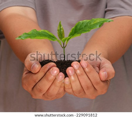Hand with plant - stock photo