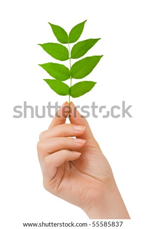 Hand with plant isolated on white background - stock photo