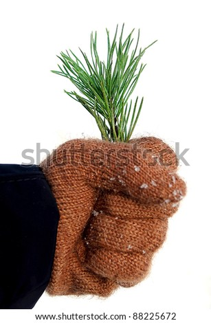 Hand with twig of pine, congratulation with Christmas and New Year, concept of ecology - stock photo