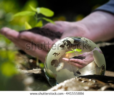 Hand with young plant in a transparent bowl. The concept of environment, nature protection, ecology - stock photo