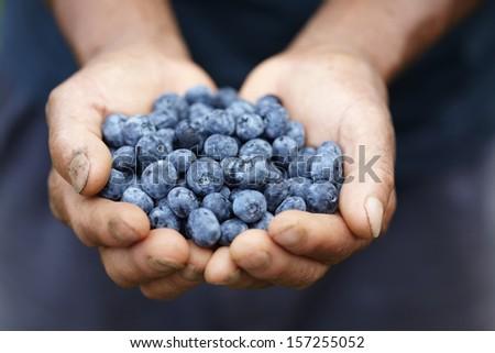 Handful of blueberries - stock photo