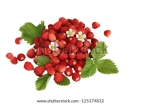 Handful of fresh wild strawberries with flowers and leaves isolated on white background - stock photo