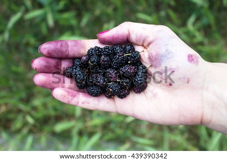 Handful of ripe wild black mulberries on a background of green grass. Top view - stock photo