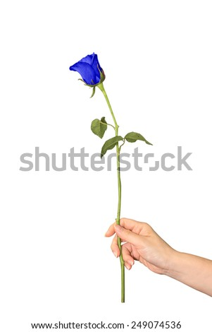 handing a rose blue as a representation of love - stock photo