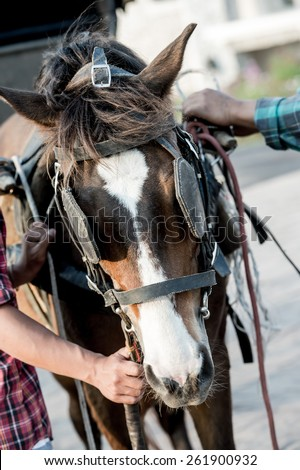 Handle carts and horses,Brown horse dragging a carriage - stock photo