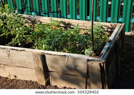 Handmade wooden raised vegetable bed with growing tomatoes in the summer garden