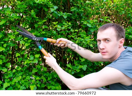 Hands are cut bush clippers - stock photo