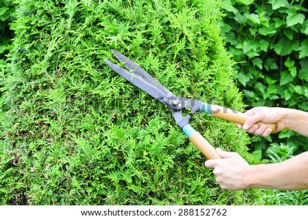 Hands are Cut Green Bush Clippers - stock photo