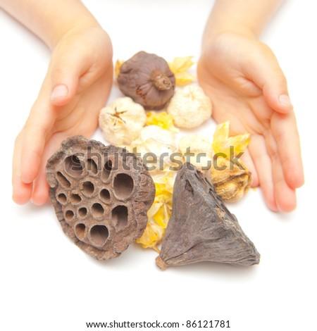 Hands gathering pot pourri on a white background - stock photo