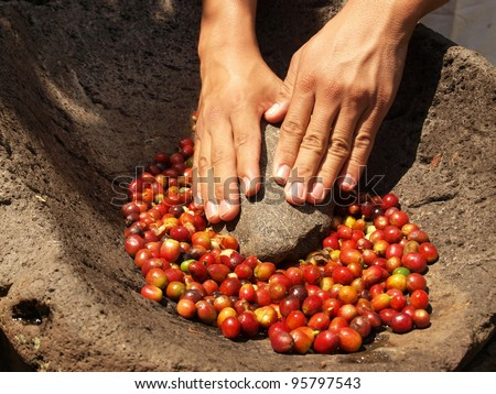 Hands grinding coffee bean berries in stone pestle - stock photo