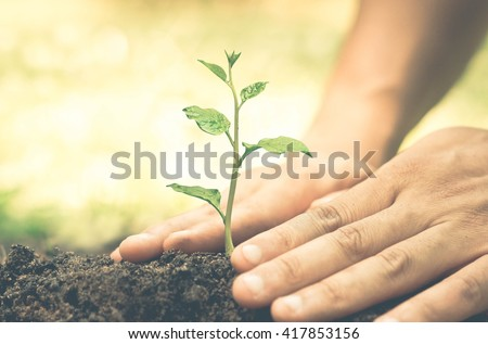 Hands growing and nurturing tree growing on fertile soil with green and yellow bokeh background / nurturing baby plant / protect nature - stock photo