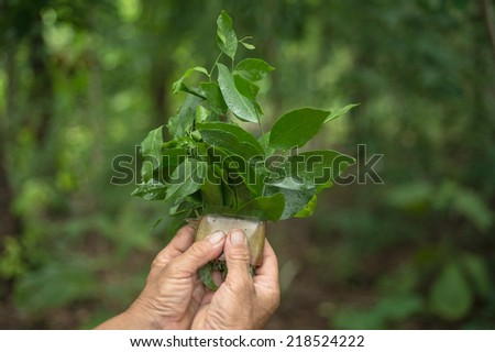 hands hold herb with a vivid green background.