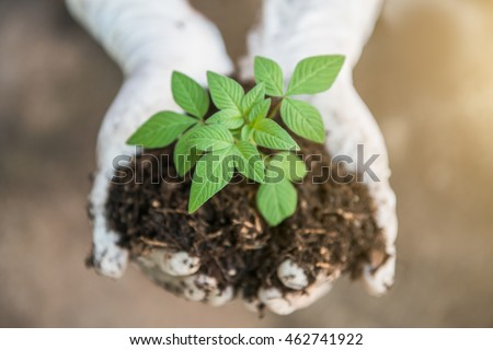 Hands holding a green young plant and light.soft focus.