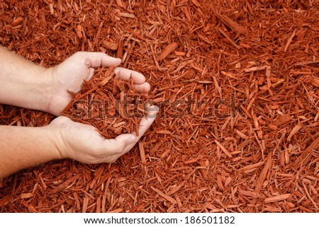 Hands holding a handful of red decorative mulch