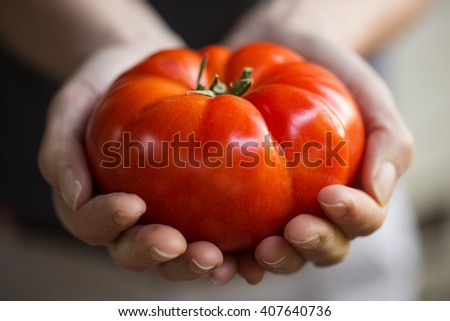 Hands holding a large, fresh tomato - stock photo
