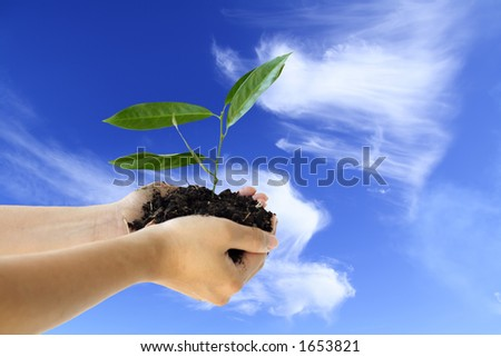 Hands holding a new plant against blue sky - stock photo