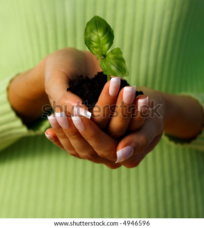 hands holding a small plant - new life protection - concept suitable for environment protection themes.  take care concept - stock photo