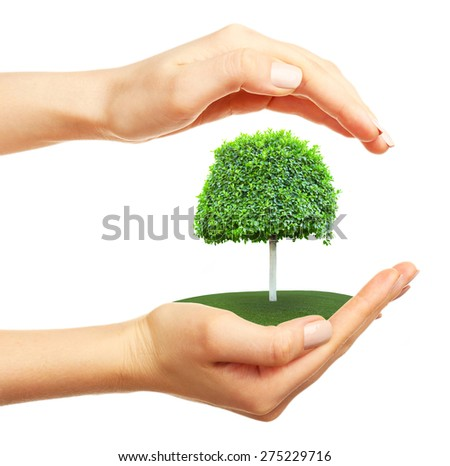 Hands holding a tree, isolated on white - stock photo