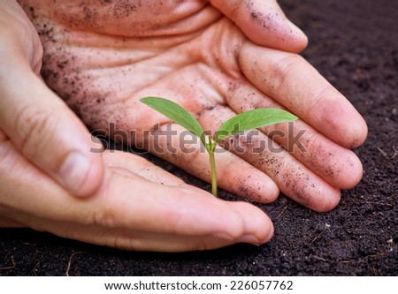 hands holding a young green tree - stock photo