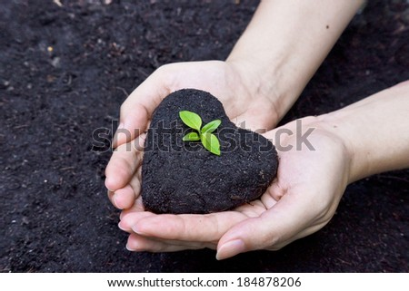 hands holding fertile soil as a heart shape with a young green tree in the middle / planting tree / growing a tree / love nature / heal the world - stock photo