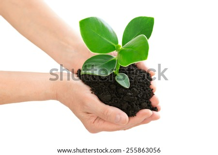Hands holding green plant ecology concept - stock photo