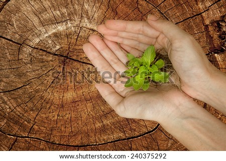 Hands holding green plant on stump tree, Ecology concept - stock photo