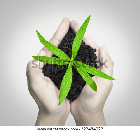 Hands holding green sapling and soil (on top) - stock photo
