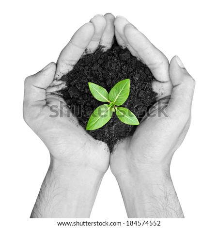 Hands holding green sapling with soil - isolated on white - stock photo