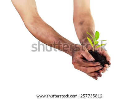 Hands holding green small plant (Business growth and new life concept) focused on  plant - stock photo