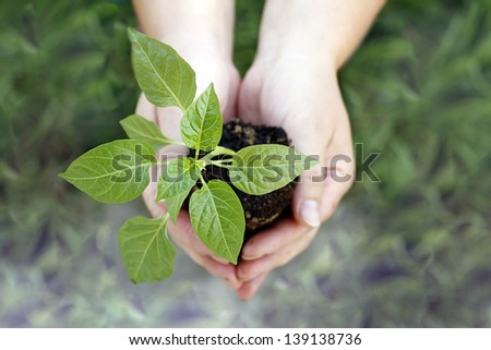 Hands holding green small plant new life concept
