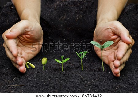 hands holding plants growing in a sequence of seed germination on soil, evolution concept - stock photo