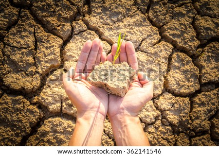 hands holding rice growing on cracked earth - stock photo