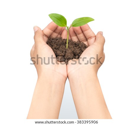 Hands holding sapling in soil isolated on white background - stock photo