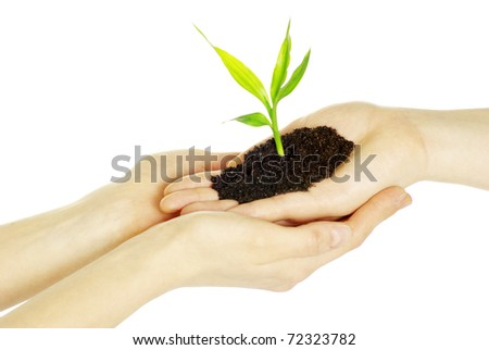 Hands holding sapling in soil  on white - stock photo