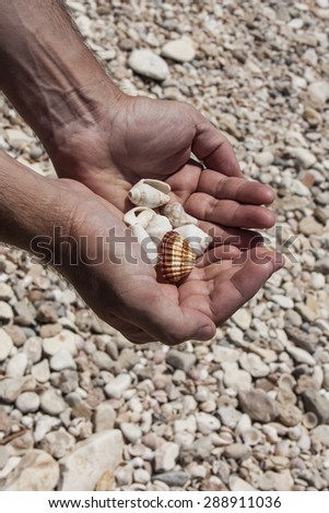 Hands holding sea shells